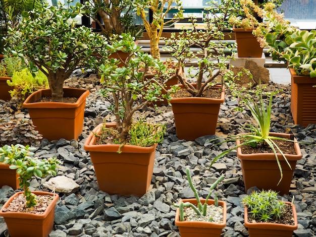 Bonsai-bäume in töpfen