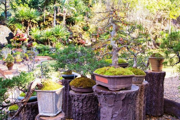 Bonsaibäume in einem topf in einem park von blumen
