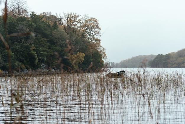 Boot im see, umgeben von pflanzen und bäumen