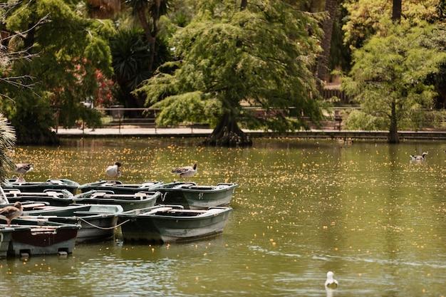 Boote am seeufer im park