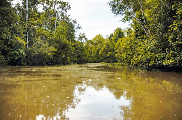 Bootsfahrt entlang des flusses kinabatangan, einer der vielfältigsten artenvielfalt in borneo.