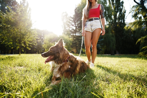 Border collie hund bei einem spaziergang im park mit seiner besitzerin