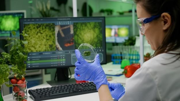 Botaniker, der petrischale mit grüner blattprobe hält, die genetische mutation nach biologischem gvo-test analysiert analyzing