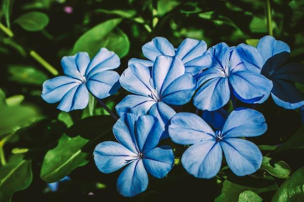Botanische blumen. wilde frühlingsblatt-wildblume. weiche pastellfarbene blumen. lila lila blumen und blütenblätter