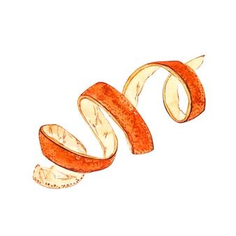 Botanische handgezeichnete illustrationen des orangenschalenaquarells.