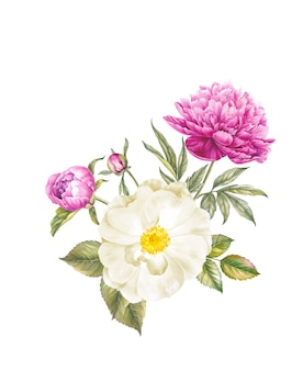 Botanische illustration des vintagen aquarells.