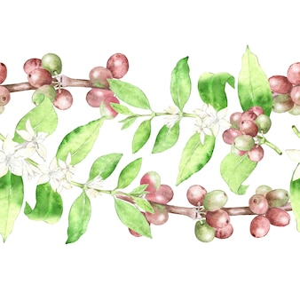 Botanische nahtlose grenze der kaffeepflanze mit blumen und bohnen