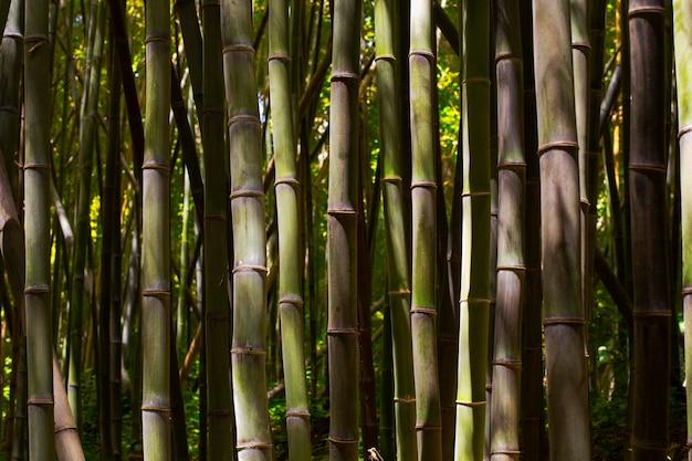 Botanischer bambuswald bei tageslicht