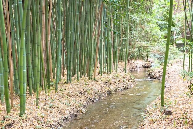 Botanischer garten aus bambus. nützliches konzept für zen, umwelt und grünes leben.
