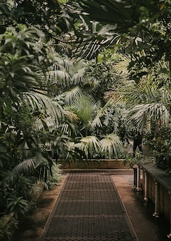 Botanischer garten stimmungsvolles gewächshaus naturfoto