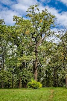Botanischer park mit verschiedenen bäumen