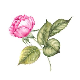 Botanisches aquarell auf weiß
