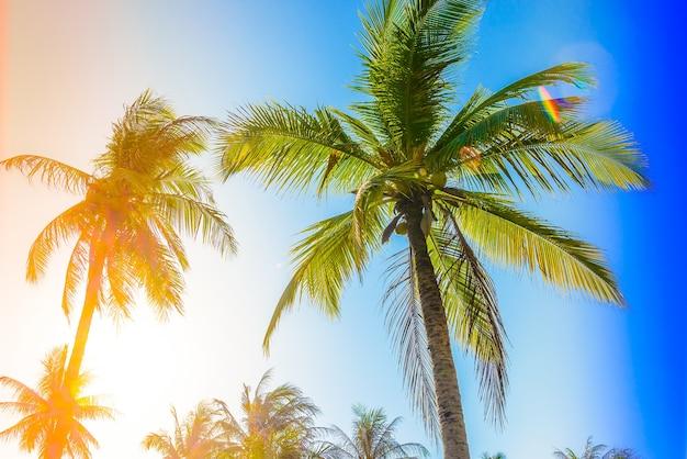 Bottom blick auf palmen