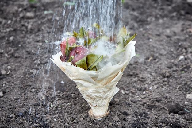 Bouquet von faulen früchten mit wasser gegossen