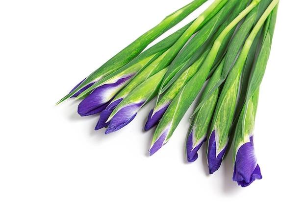 Bouquet von isolierten lila iris auf einer weißen oberfläche