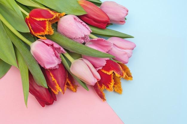 Bouquet von rosa und roten tulpen auf einem blau und rosa
