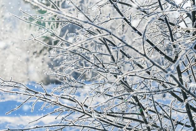 Brach des baums bedeckt mit frost und sonne