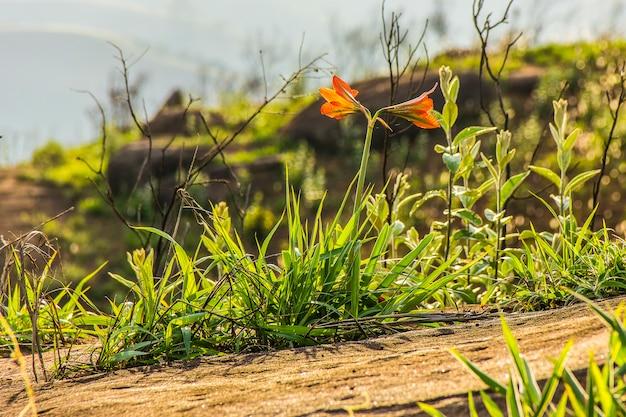 Brasilianische pflanzen im freien