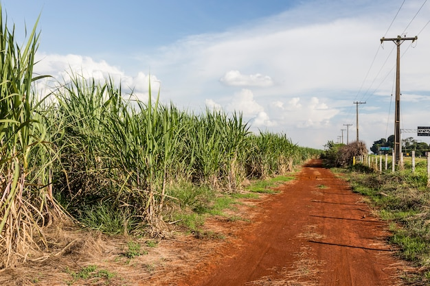 Brasilianische zuckerrohrfelder unter einem blauen himmel.