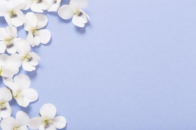 Bratschenblumen auf farbigem papierhintergrund