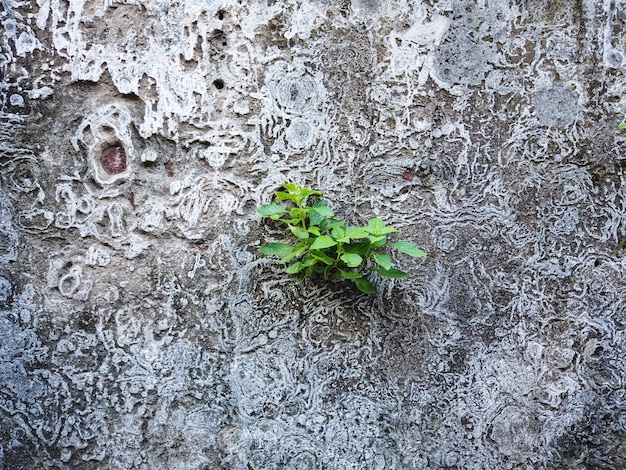 Braune backsteinmauer der alten weinlese mit bäumen herauf hintergrund für design