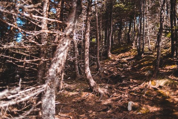 Braune bäume auf braunem boden während des tages