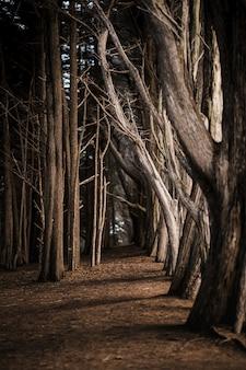 Braune bäume auf braunem boden