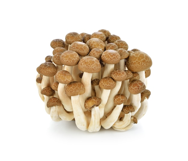 Braune buchenpilze, shimeji-pilz, essbarer pilz lokalisiert auf weiß