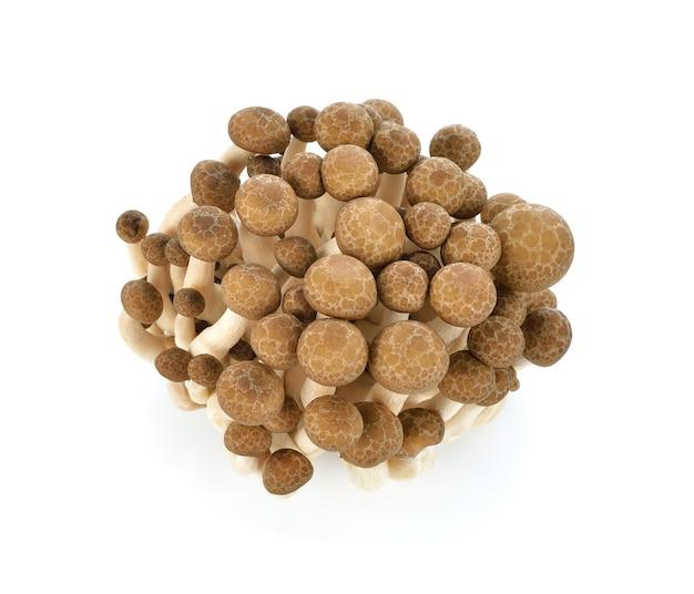 Braune buchenpilze, shimeji-pilz, essbarer pilz lokalisiert auf weiß Premium Fotos