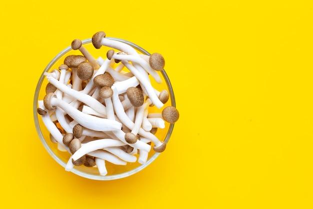 Braune buchenpilze, shimeji-pilz, speisepilz auf gelbem hintergrund.