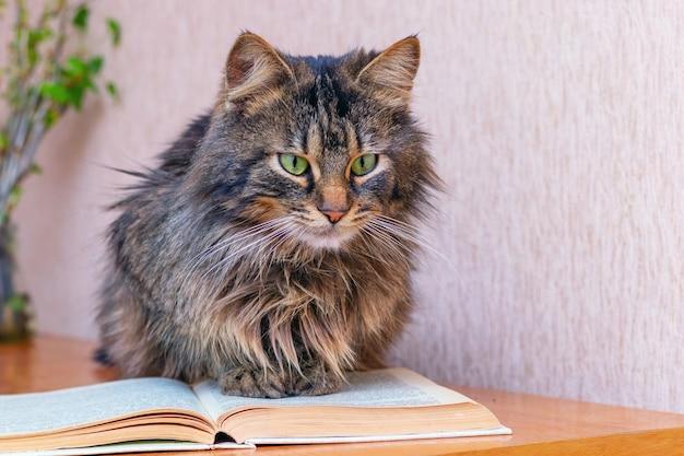 Braune flauschige katze, die ein buch liest, abenteuerliteratur liest