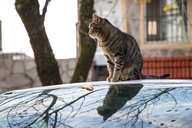 Braune gestreifte katze, die auf einem auto sitzt, das während des herbstes gefangen genommen wird