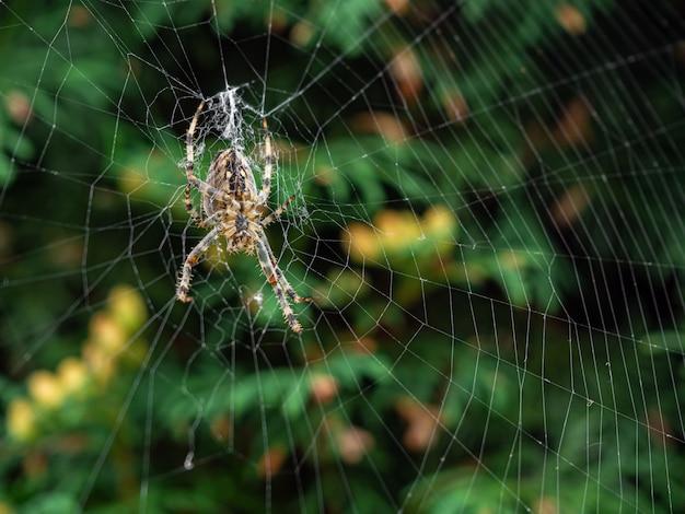 Braune gestreifte spinne, die tagsüber ihr natürliches netz bildet