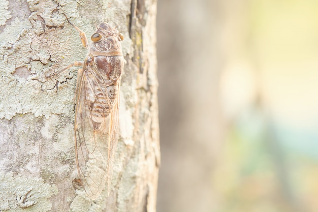 Braune insekten auf bäumen und muster.