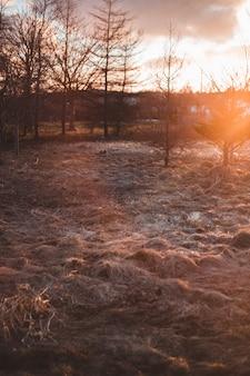 Braune kahle bäume während des sonnenuntergangs