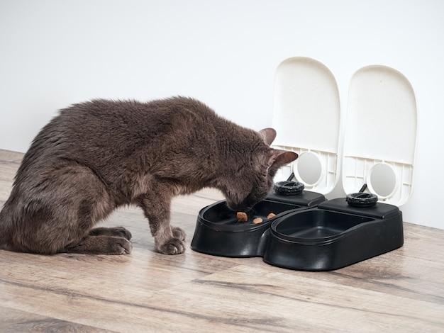 Braune katze frisst aus dem automatischen futterautomaten