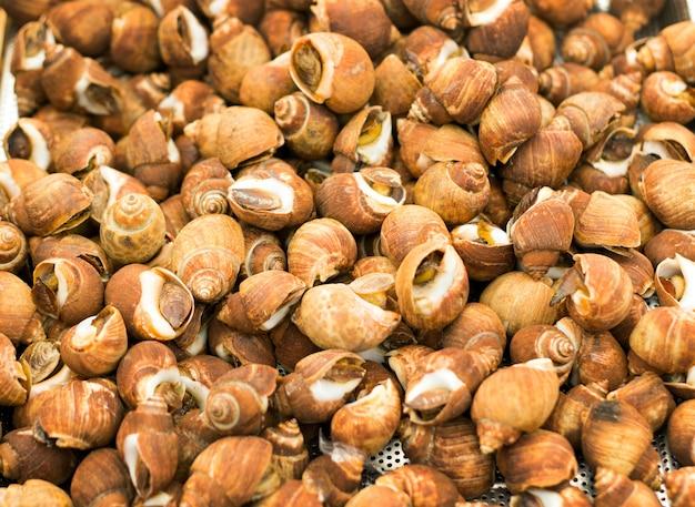 Braune molluskenschale auf dem markt