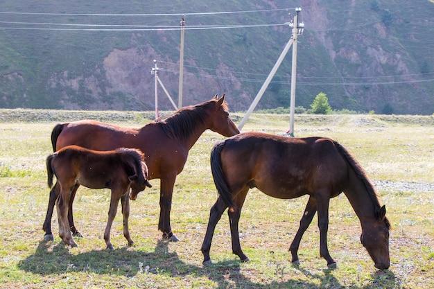 Braune pferdefamilie im feld in juta, georgia