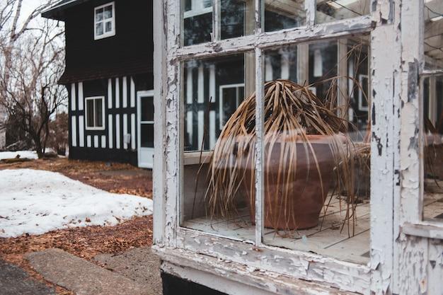 Braune pflanze vor glasfenster