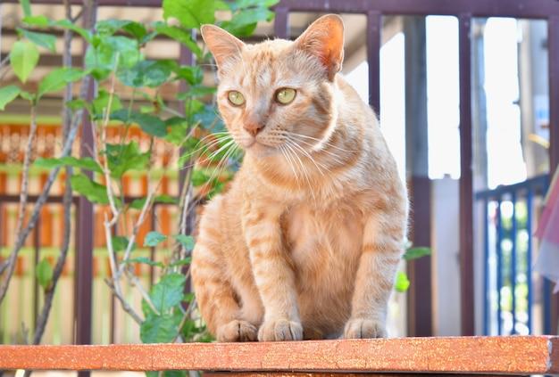 Braune siamesische katze, die auf dem tisch sitzt.
