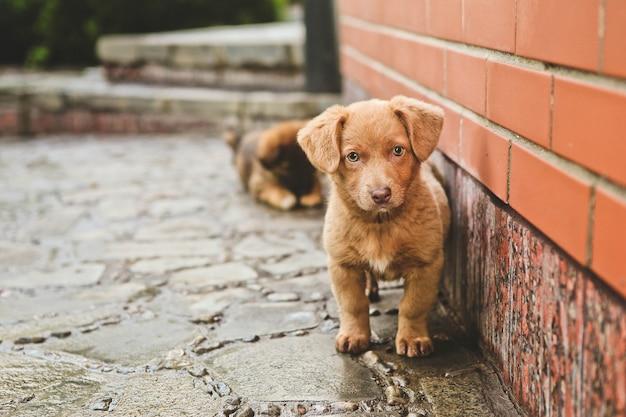 Braune süße welpen hund sitzt schritte haus