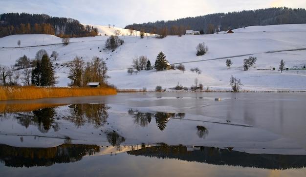 Braune und schwarze bäume, die tagsüber von schnee umgeben sind