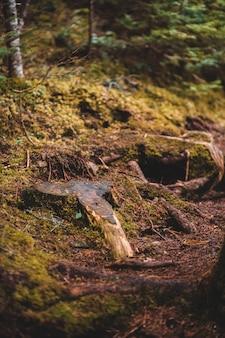 Brauner baum log auf grünem gras