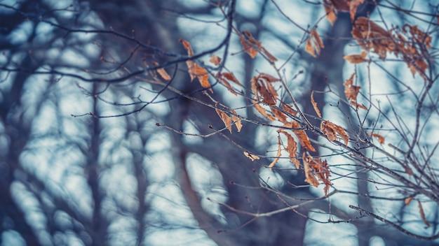 Brauner blattloser baum im winter