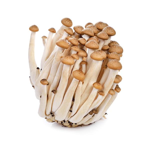 Brauner buchenpilz, shimeji-pilze auf weißem hintergrund