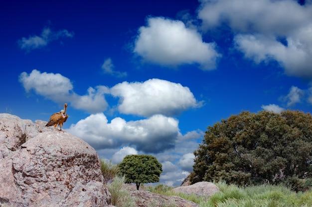 Brauner erstaunlicher geier auf einem großen stein mit einem blauen himmel