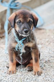 Brauner hund des jungen obdachlosen welpen glücklich auf kiesboden nahe der straße in thailand
