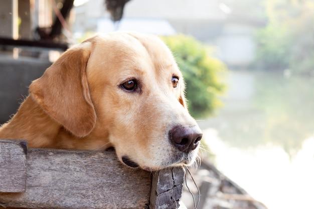 Brauner hund warten über dem käfig