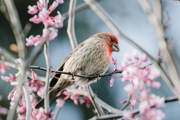 Brauner und roter vogel auf rosa blume