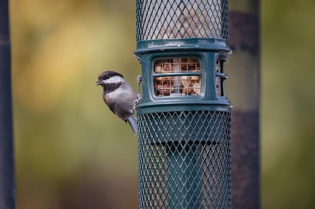 Brauner und weißer vogel auf blauem käfig